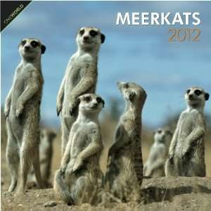 Animal Calendars Meerkats   12 Month   11.7x11.7 inches