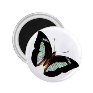 Butterfly Paint Art Fridge Souvenir Magnet 2.25